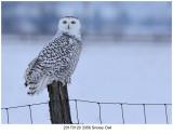 20170120 3356 Snowy Owl.jpg