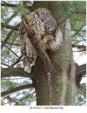20170127-1 4323 Barred Owl.jpg