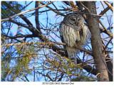 20161228 0463 Barred Owl.jpg