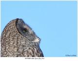 20170220 4566 Great Gray Owl.jpg