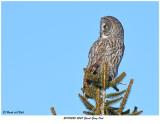 20170220 4547 Great Gray Owl.jpg