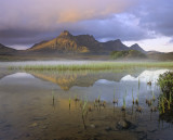 Awakening Ben Loyal