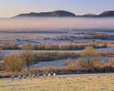 Strathconon Mist