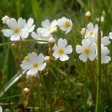 Flore des Préalpes fribourgeoises