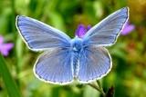 Papillons - Schmetterlinge - Butterflies