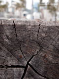 20130913_9130925 Cracked Below (Fri 13 Sep)
