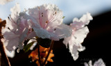 20130914_31252 Spring Rains (Sat 14 Sep)