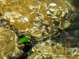 20150210_004766 Natural Abstraction With Green Leaf, Polarised (Tue 10 Feb)