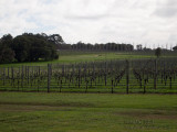 8080703 - The Vineyard