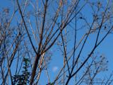 20160715_014537 Winter Sun With Dissolved Moon (Fri 15 Jul)