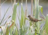 verschillende soorten kleine zangvogels