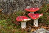 Fungi & Friends