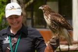 Gatineau Park Bird of Prey Show