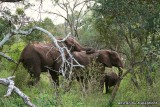 The big five and other south african mammals