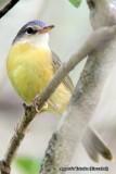 Some endemic birds of Madagascar