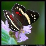 Butterfly 03.jpg