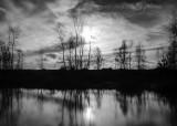 Heemtuin tegenlicht in zwart-wit