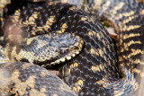 Reptielen en Amfibien - Reptiles and Amphibians