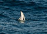 Zeezoogdieren - Marine Mammals