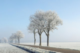 Frozen fog - Aangevroren mist