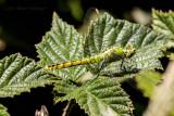 Dragonfly on Raspberry