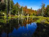 On the beaver dam