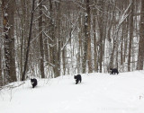 Rosie, Rocky and Jimi on a woods walk in the fresh snow