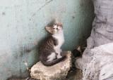 Las Salinas kitty