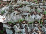 Limestone terrain with snail
