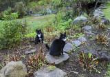 Rocky and Jimi on a rainy day