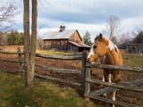 Horse on New Boston Road