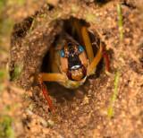 big katydid in hole in tree