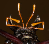 Beetle mouthparts from below