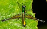 +-shape grasshopper