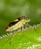 bug with mites and wasp