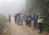Birding in the mist