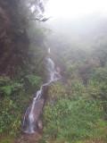 Cloud Forest Cascade