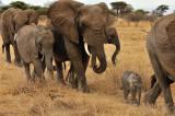 Photo Safari - Tanzania 2013