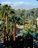 Palms around the pool