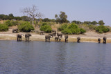 Elephants and river