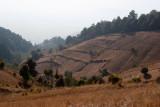 Area de Cultivo de Trigo en Partes del Volcan