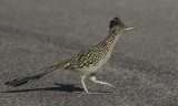 Birds of Sabino Canyon
