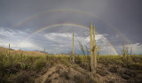 Monsoon Rainbows