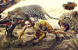 Jaguars and Painted Girl