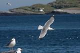 Birds of the Varanger Peninsula, Norway