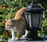 Rubbing The Lamp