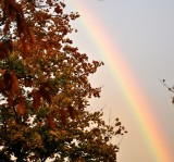 Some Leaves and a Rainbow