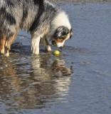 If I Drop My Ball Will That Other Dog Get It?
