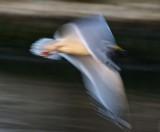 Speedy Wings