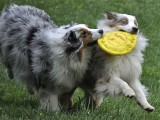 The Joy of Playing and Sharing